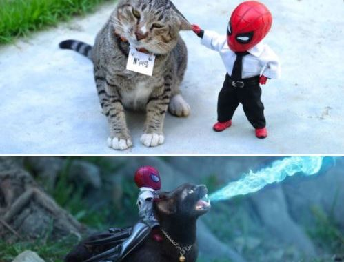 This Artist Puts Mini Spiderman And Cats For The Hilarious Adventures, And I Bet You've Never Seen Something Like This Before!