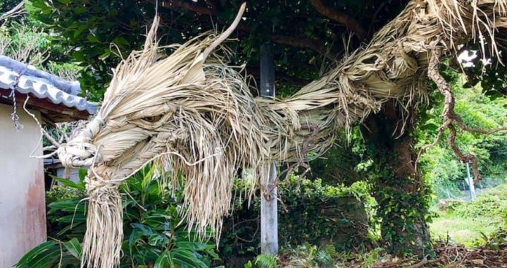 """This Japanese Artist Crafts Dragon Sculpture Out Of a Palm Tree And I Cannot Wait Longer To Shout """"AWE!"""""""