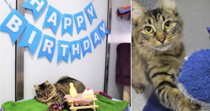 Monique Is Looking For A Forever Home After Nobody Showed Up To Her B'Day Party!