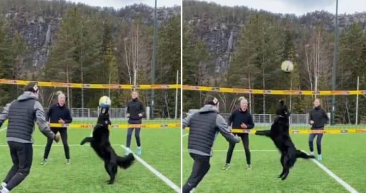 Watching This Supernatural Video Of A Dog Playing Volleyball With 3 Humans Is Making Me Jump On My Bed!