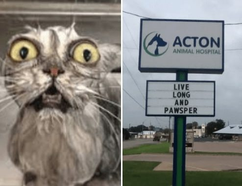 Here're Some Funny Cat Jokes For You To Remember When You Visit The Vet Clinic Next Time!