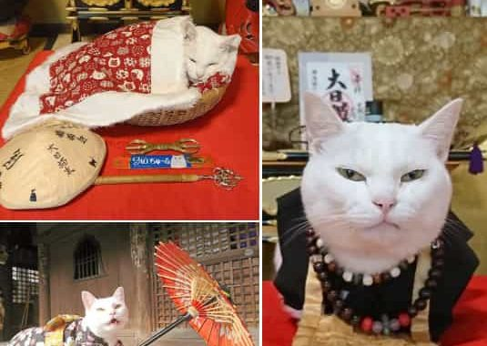 After Reading This Article, You're Planning To Visit The Meow-Meow Cat Shrine In Japan For Sure!
