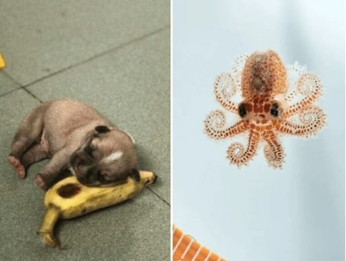 I Want To Pet Every One Of The Below Listed Cutest Tiny Animals, And By Gosh, I Cannot Be Convinced Otherwise!