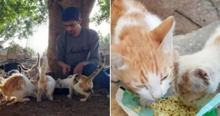 People Have Fled This War-Torn Town And Fewer Than Hundred Humans Live Their While Stray-Cats Rule The Streets!