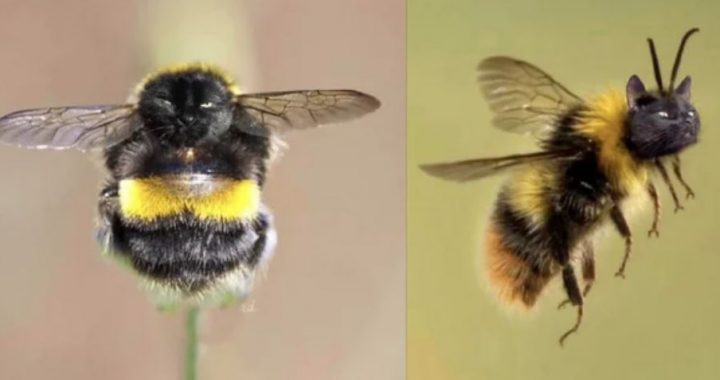 Reddit User Photoshops Her Cat's Face Onto Bees, And It Looks As Sweet As Honey!